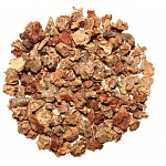 Golden Root (Rhodiola rosea) 2