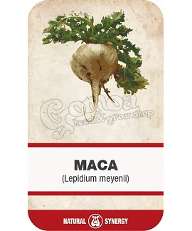 Maca root (Lepidium meyenii) powdered