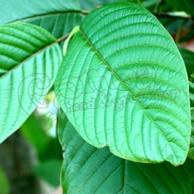 Green Vein Kratom 2